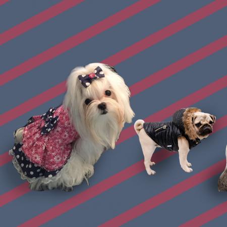 Diseño de Moda Para Mascotas, Corte y Confección